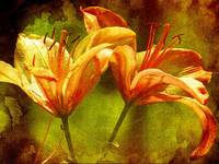 twin lilies weathered vintage