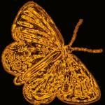"""""""butterfly fiery orange"""" by lizmix"""