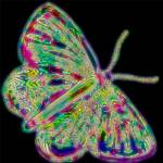 """butterfly neon2"" by lizmix"