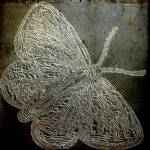 """butterfly engraved plaque"" by lizmix"
