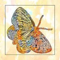 butterfly orange art