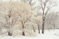 winter-wonderland-10