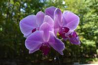 angies orchids