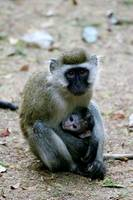 Monkey Mom and Baby