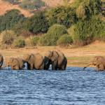 """Crossing the Chobe River 5737"" by rayjacque"