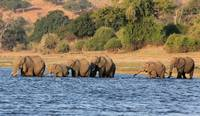 Crossing the Chobe River 5737