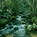 """Secluded Toroonga River Tributary Enhanced"" by TheNorthernTerritory"