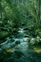 Secluded Toroonga River Tributary Enhanced
