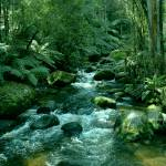 """Secluded Toroonga River Tributary"" by TheNorthernTerritory"