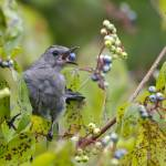"""Gray Catbird"" by WildAboutNaturePhotography"
