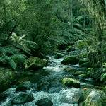 """Secluded Toroonga River Tributary Cropped X 2 Enha"" by TheNorthernTerritory"