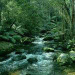 """Secluded Toroonga River Tributary Enhanced Cropped"" by TheNorthernTerritory"