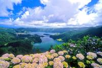 Hortensias/ Hydrangeas At 7 Cidades Lakes