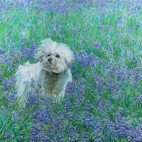 Bichon in Bluebonnets Art Prints & Posters by Dominic White