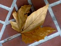 Leaf on Brick