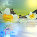 """Floating Narcissus Dream"" by AnneVis"
