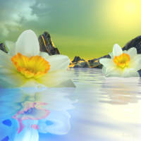 Floating Narcissus Dream
