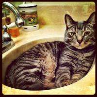 Simon in the Sink