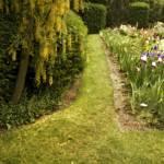 """Iris Gardens"" by bonniebruno"