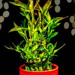"""Bamboo"" by iPilot1000"