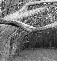 cypress tunnel b/w