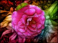 Pink_rose-Flower_Blossom-coloful