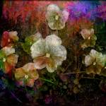 """""""pansy-flowers-abstract-painting-floral"""" by Art_by_Lilia"""