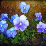 """blue-pansy-flowers-art"" by Art_by_Lilia"