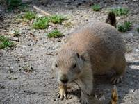 GROUND HOG 2
