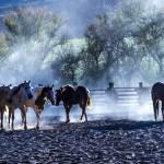 """Moab Horses CPY1-4473"" by pixelcene"