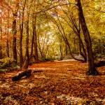 """""""Utah Mountain Meadow-3719"""" by pixelcene"""