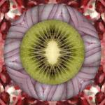 """Fruit mandala - kiwi"" by belinda"