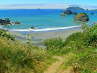 Walk With Nature - Pacific California Coast