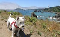 Miss Daisy And The California Coast