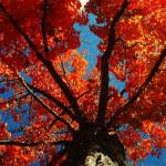 """""""Trees on Fire"""" by KerriAnnCrau"""