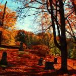 """Autumns Rest"" by KerriAnnCrau"