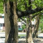 """-Gerry Stecca- tree wrap 4 -GerryStecca.com-"" by GerryStecca"