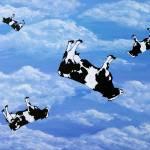 """Falling Cows"" by Bela-Manson"