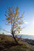 Lanscape with the tree on the coast