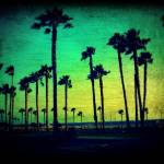 """""""Many Palms Paint"""" by brookelundy"""
