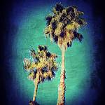 """""""Twin Palms Paint"""" by brookelundy"""
