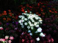 flowerbed center bright