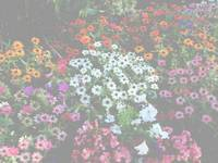 flowerbed white overlay
