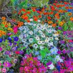 """flowerbed color pencil"" by lizmix"