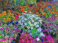 flowerbed color pencil