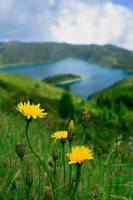 Springtime in Fogo crater, Azores