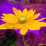 """Flower Power"" by hannahsview"