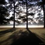 """""""Tall Shadows"""" by hannahsview"""