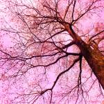"""""""Branching Out"""" by hannahsview"""