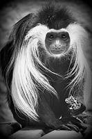 Primates gallery